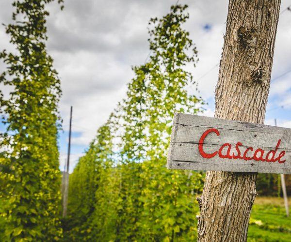 cascade-hop-field-PT5QBDV